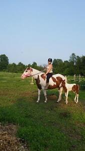 APHA registered old foundation paint mare for sale