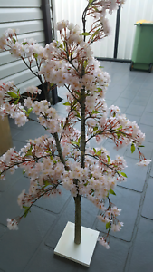 Pink blossom tree Bossley Park Fairfield Area Preview