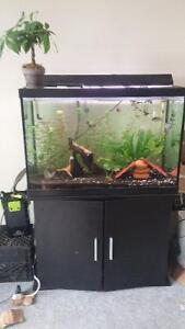 65gallon aquarium fully equiped with stand and fish