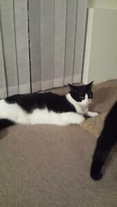 Adopt 2 gorgeous cat sisters!!!