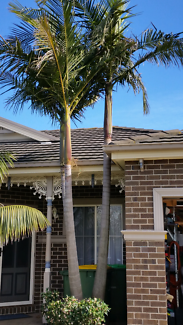 Palm Tree price negotiable