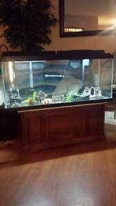120 Gallon Fish Tank & All Accessories