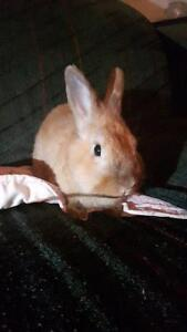 Older rescue rabbit needs special home