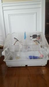 Paired Society Finches with medium size cage