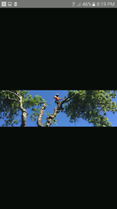 United arbor tree service Campbelltown Campbelltown Area Preview