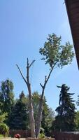 Tree Removal, Tree Pruning, Stump Grinding, Tree Service,