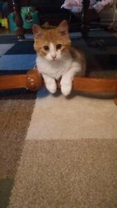 4 month old kitten *needs a loving home*