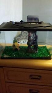 10 gallon marine land fish tank
