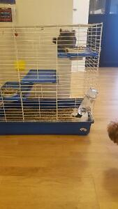 Chinchillas are looking for New & Loving Home!