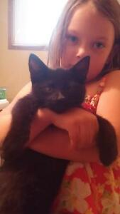 gone free 3 mnth old male black kitten check out www.lchs.ca