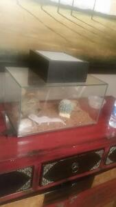 Leaporde Gecko for sale to a good home