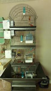 Elevage touis céleste avec  module cage jovaco