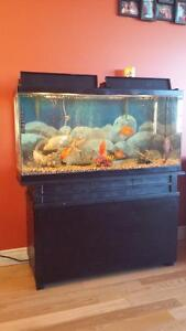 36 Gallon Fish Tank including Fish