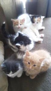 free kittens to good homes only