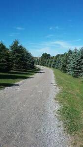 5 acres of land available for rent plus a huge workshop/storage Peterborough Peterborough Area image 7