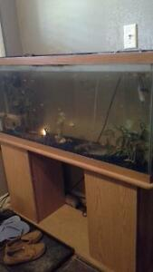 Fish tank with wood stand and fish included $100.00