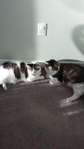 2 cats free to forever home