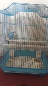One budgie with cage