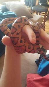 willing to take In any unwanted reptiles very experienced