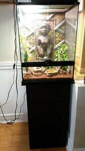 Leopard Gecko + vivarium + stand + all accessories