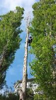 Tree Services, Removals, Pruning, and Planting.