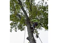 Gardening/Landscaping and tree Cutting service