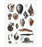 Cowry Kijiji In Alberta Buy Sell Save With Canada S 1