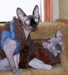 Two Registered Sphynx Cats Neutered Supplies