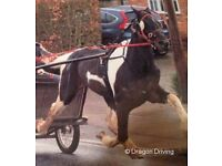 horse £850 or offers