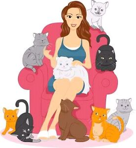 HAPPY CAT- Pet sitter for cats only Ascot Vale Moonee Valley Preview