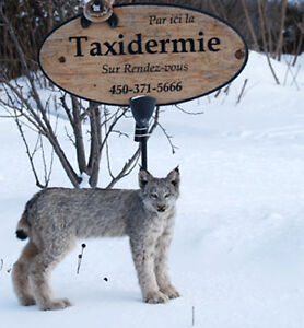 Bougie Taxidermie, Service complet , Valleyfield West Island Greater Montréal image 10