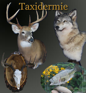 Bougie Taxidermie, Service complet , Valleyfield West Island Greater Montréal image 1