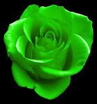 Southern Irish Rose's Mercantile