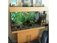 JUWEL RIO 125 3FT FISH TANK FULL SETUP WITH CABINET
