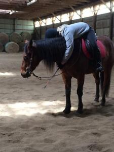 Looking to hire a Hunter Jumper Coach