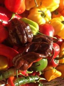 Carolina Reaper/ Ghost Pepper/ Chili Pepper seeds and Hot Sauce London Ontario image 9