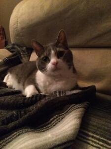 Great house cat,free, needs home or going to shelter