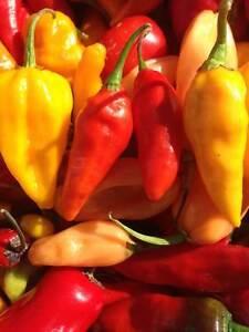 Carolina Reaper/ Ghost Pepper/ Chili Pepper seeds & Live Plants Cambridge Kitchener Area image 10