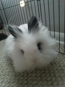For sale cute white rabbit with 4x4 play area