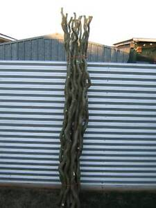artificial trees in Toowoomba Region QLD Home Decor Gumtree