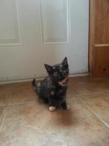 Beautiful kittens available now