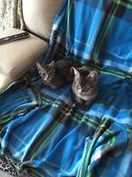 2 adorable kittens for sale!