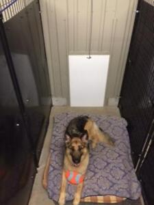 Dog Daycare and Boarding Kennel London Ontario image 9