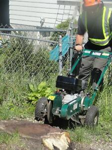 Stump grinding and removals. Peterborough Peterborough Area image 1