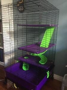 Ferret 'starter kit' for sale