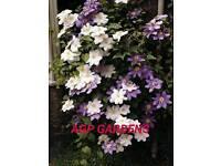 Gardening services AIRDRIE