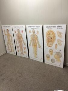 Acupuncture Meridian Charts