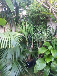 Xx large-small outdoor indoor cheap Plants Ingleburn Campbelltown Area Preview