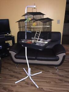 Beautiful pair of loved birds with beautiful cage and stand