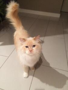 Gorgeous female cat, free to good home